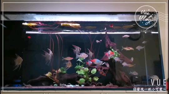 小雜缸~ 吉林观赏鱼 吉林龙鱼第1张