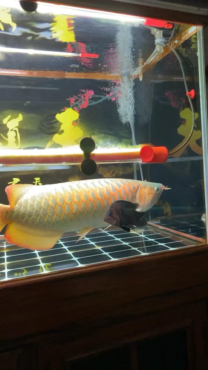 长春宠物救助站彩虹 长春观赏鱼 长春龙鱼第1张