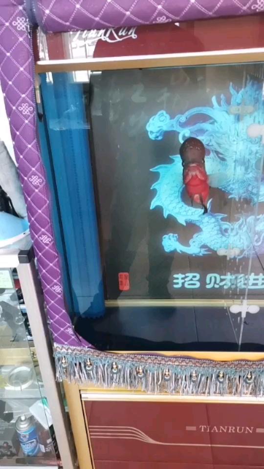 西宁热带鱼批发市场在哪里水温在32度