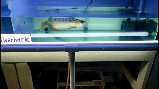 呼和浩特最大鱼缸批发市场自己弄的侧灯